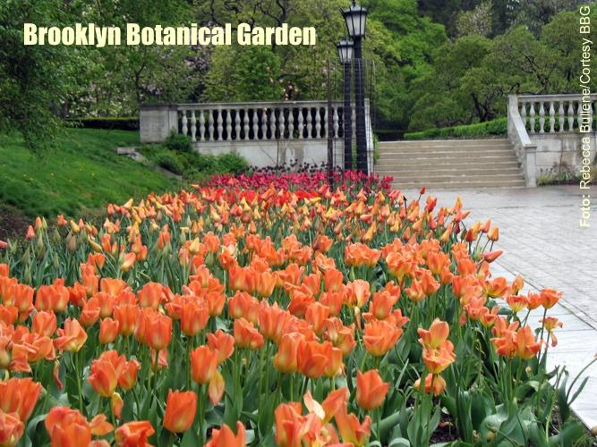 NY_Brooklyn_Botanical_Garden_1