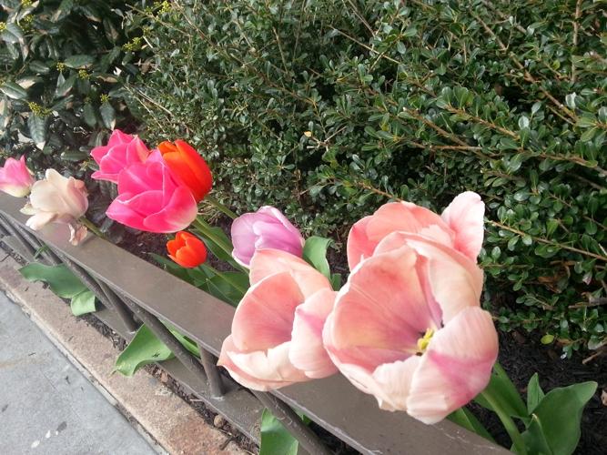 NY_Flores_5