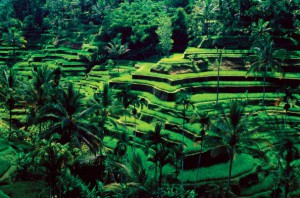 Ubud, Bali (Foto: inbali.org)