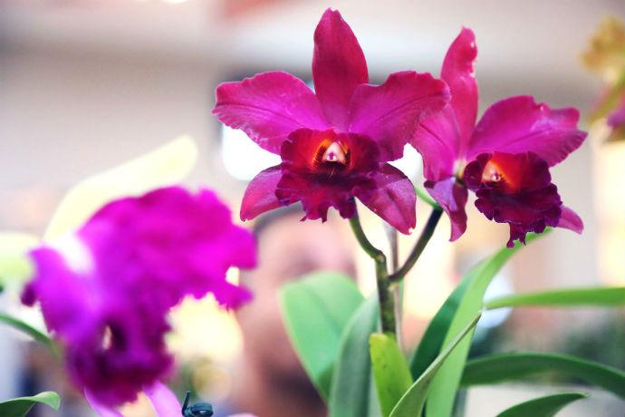 Festival de orquídeas no Riopreto Shopping