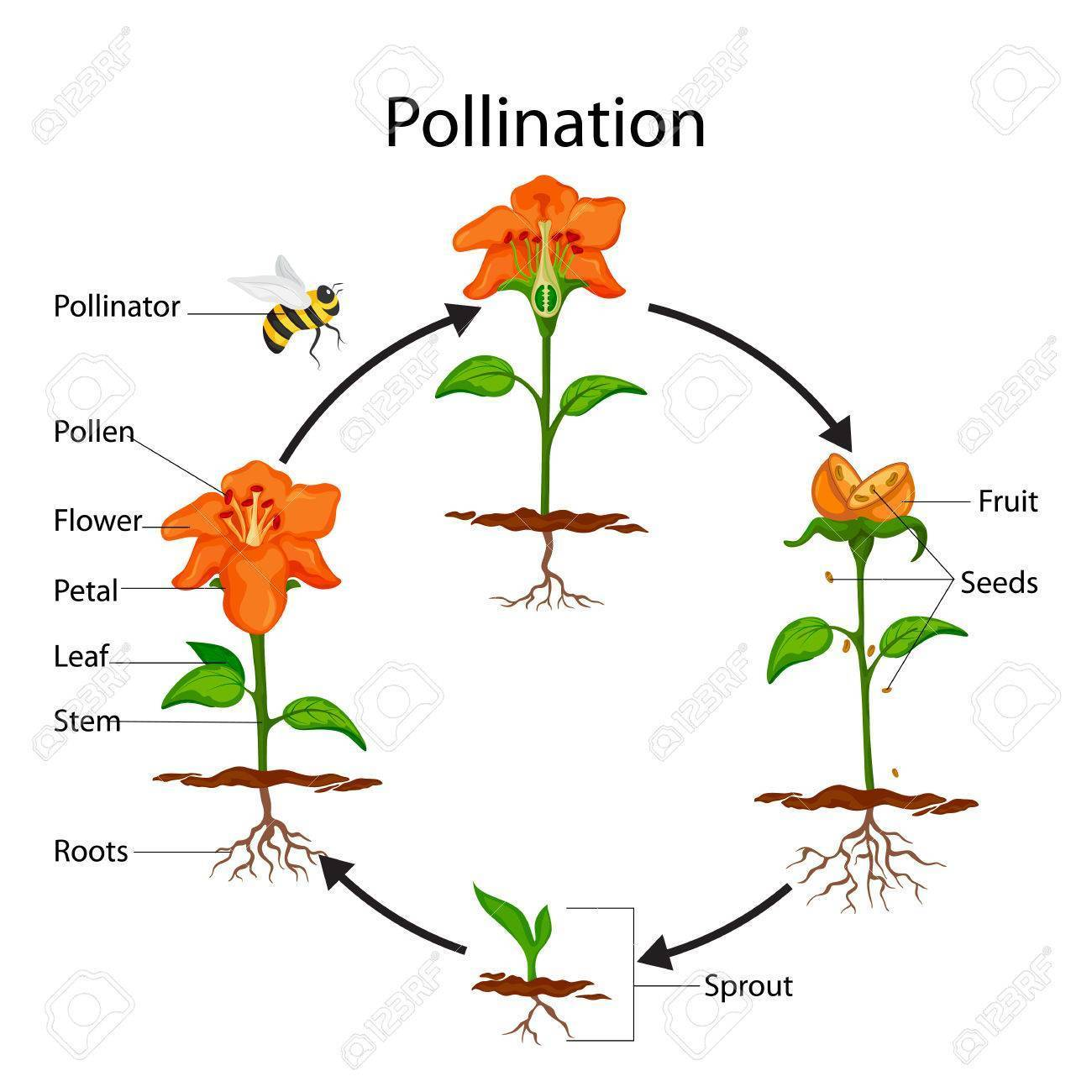 What Is Pollination Give Its Two Types