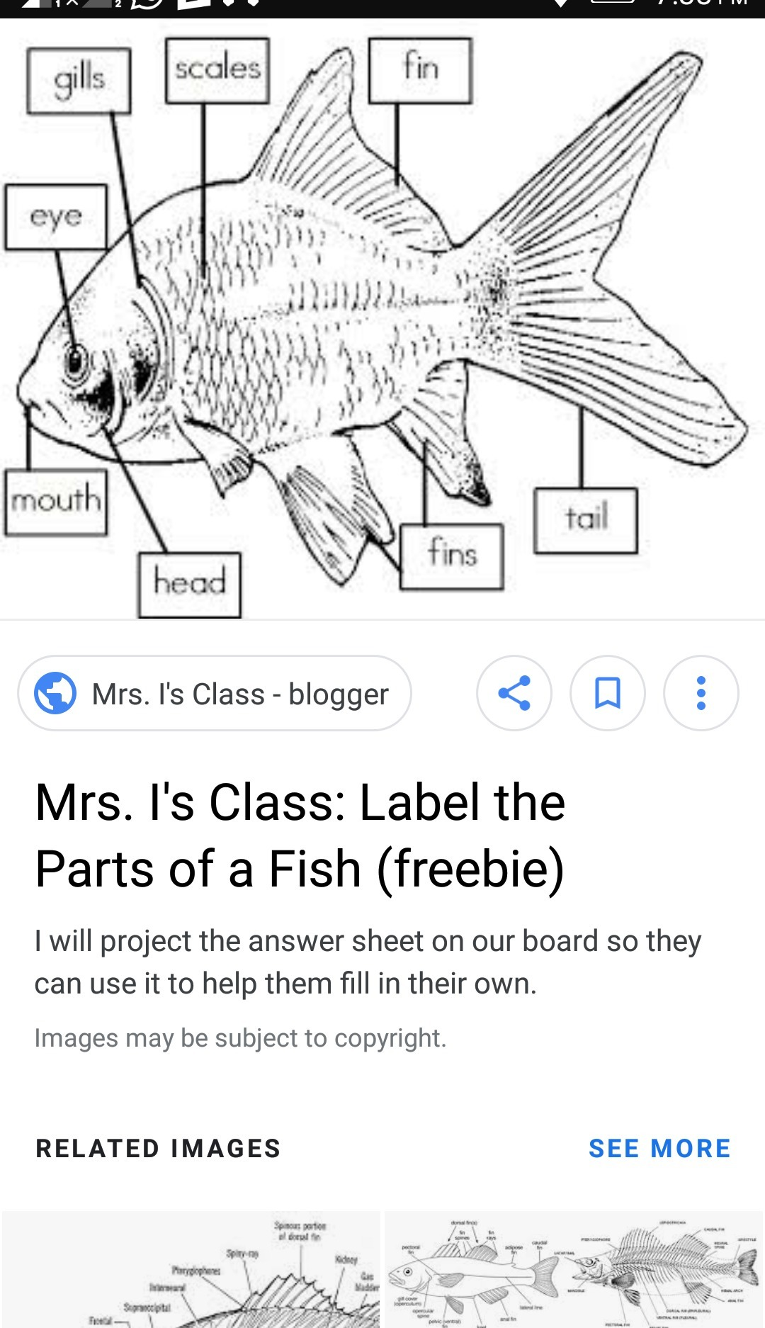34 Label The Parts Of A Fish