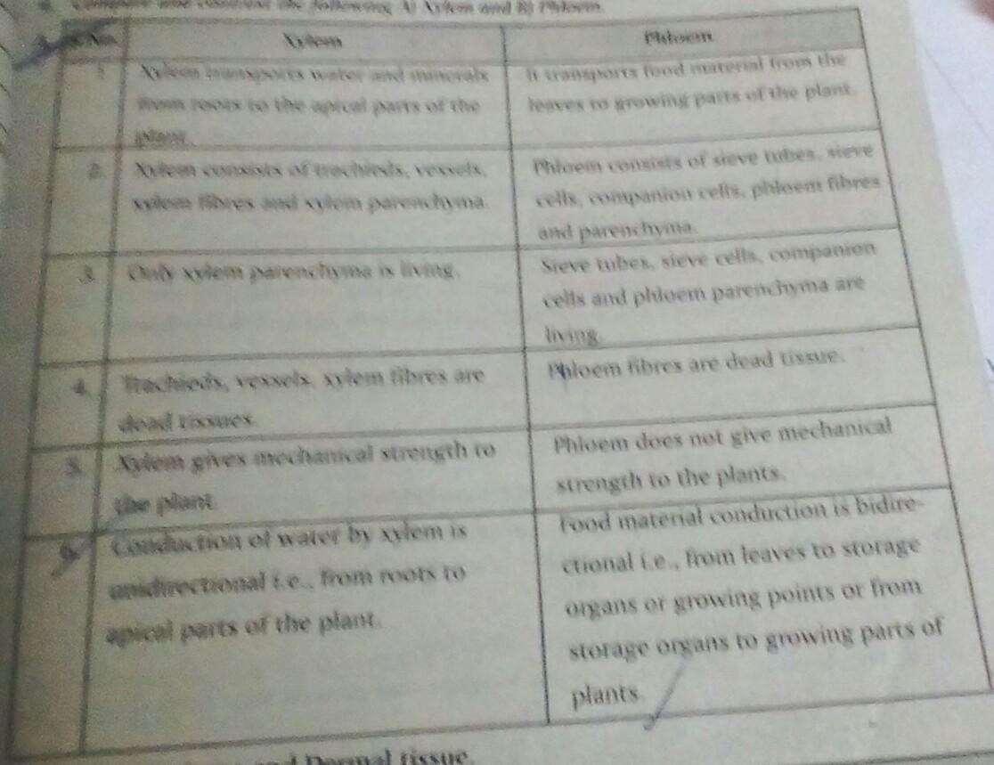 Explain About Xylem And Phloem