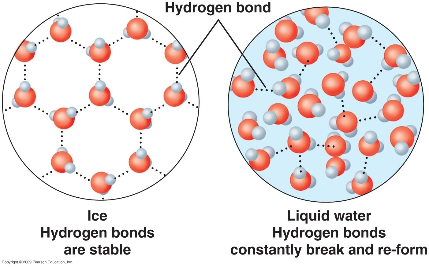 Why Density Of Ice Is Less Than That Of Water