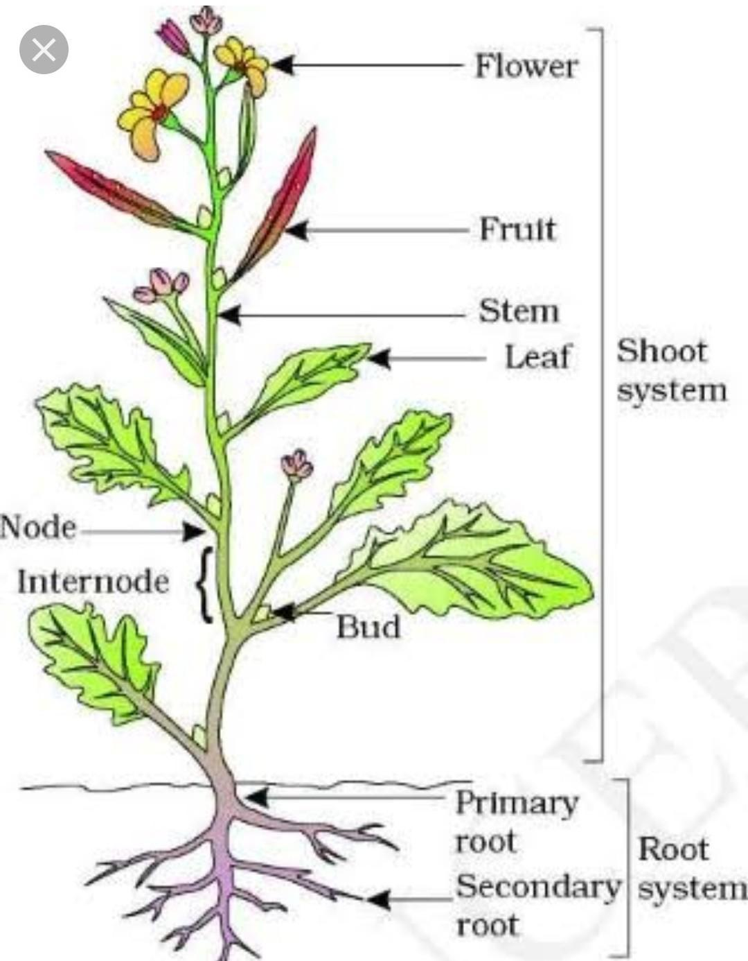 32 Parts Of A Plant To Label