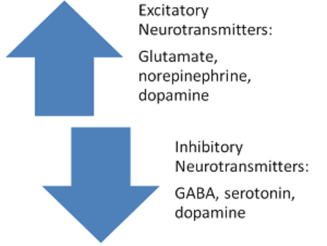 List Of Excitatory And Inhibitory Neurotransmitters