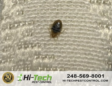 bed-bug-removed-from-Customers-Home-in-Southfield-MI