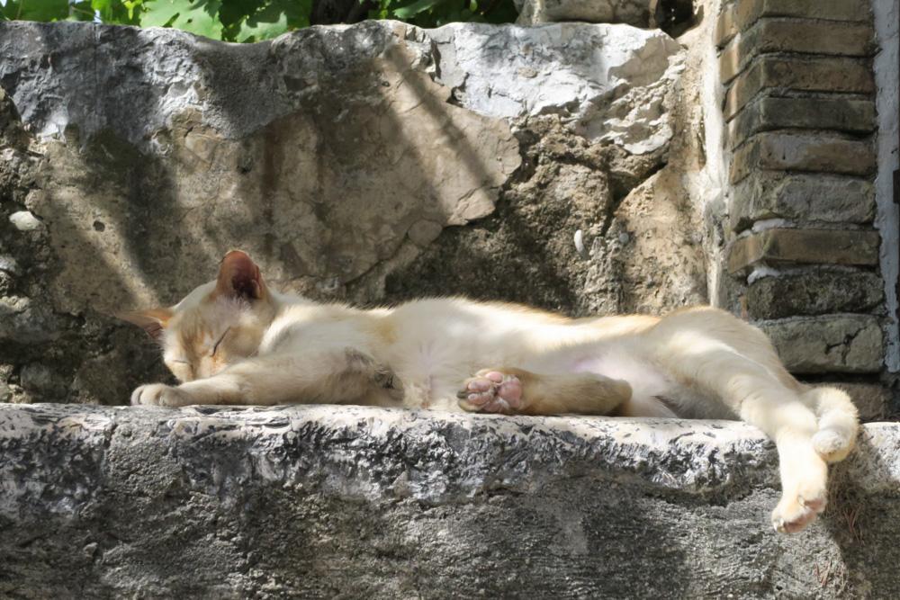 サン・ポール・ド・ヴァンスにいた猫