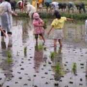 田植えの際の子供の服装は?田植え体験に必要な持ち物と注意点