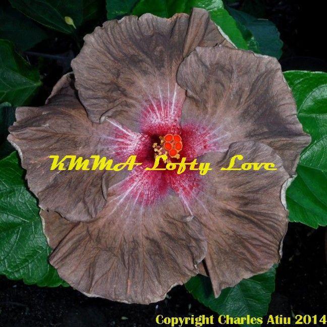 KMMA Lofty Love