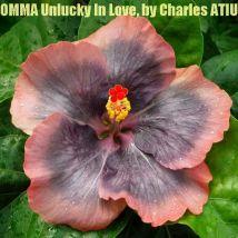 26 OMMA Unlucky In Love