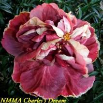 4 NMMA Charles's Dream