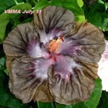 vmma-july-11