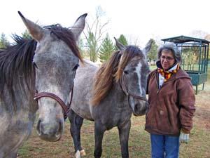 Photo-Horses_051