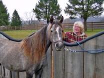 Photo-Horses_nov-18-2013_004