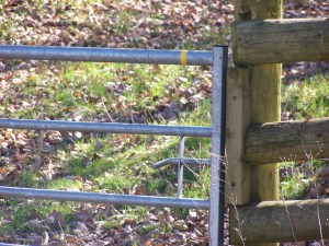 Walking on Hicks Farm