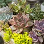 Cacti Succulent Care Tips Top 10 Succulents For Your Home