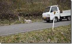 北海道犬キャプチャ