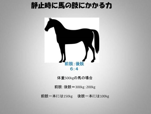 馬の肢にかかる力