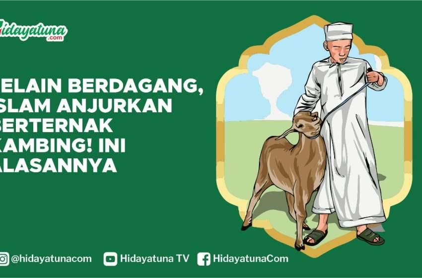 Selain Berdagang, Islam Anjurkan Berternak Kambing! Ini Alasannya