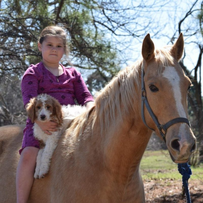 girl riding horse with dog