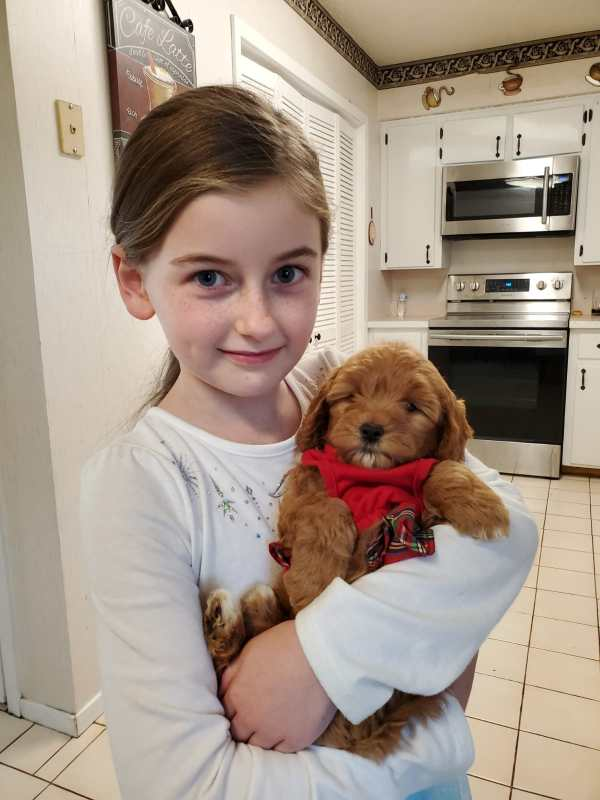 girl holding goldendoodle puppy