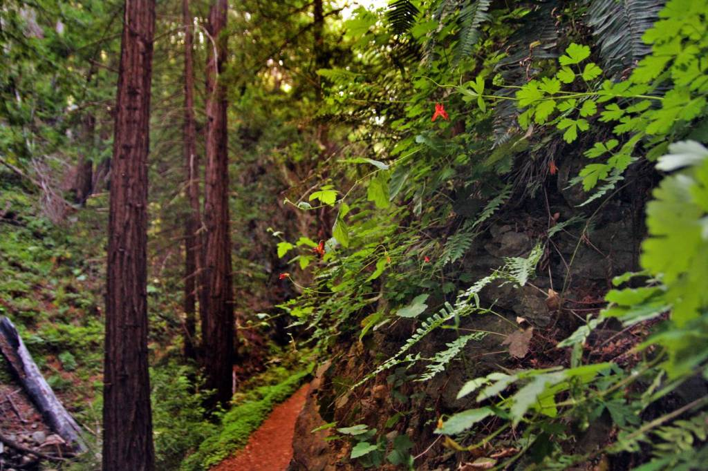 Hike to the historic limekilns in one of the redwood forests of Big Sur