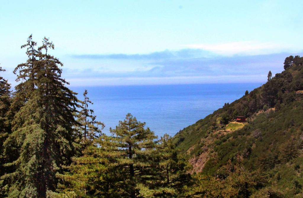 Hike the tanbark trail in Big Sur, one of the most magical forests around!