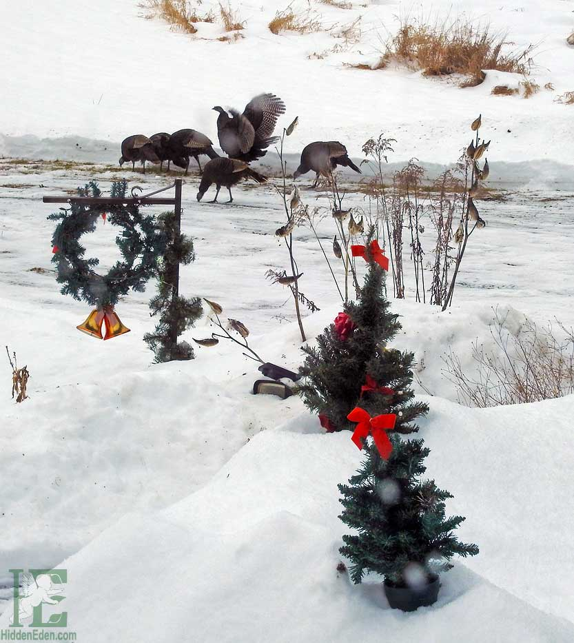 wild turkeys in the snow with Christmas decorations on driveway