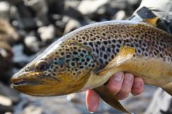 Mountain Fishing Trout | Hidden Iceland