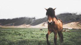 Icelandic Horse | Hidden Iceland | Photo by Norris Niman