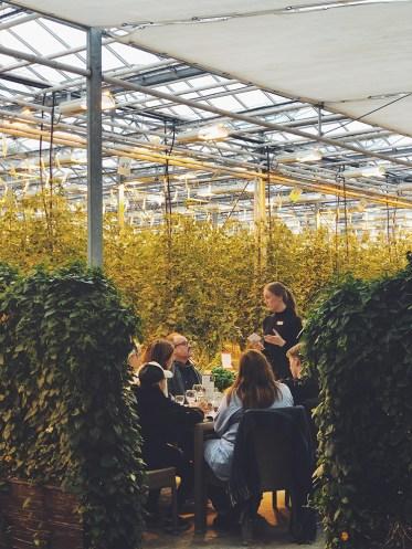 Friðheimar Tomato Greenhouse | Golden Circle: Platinum Tour | Hidden Iceland | Photo by Dagný Björg Stefánsdóttir