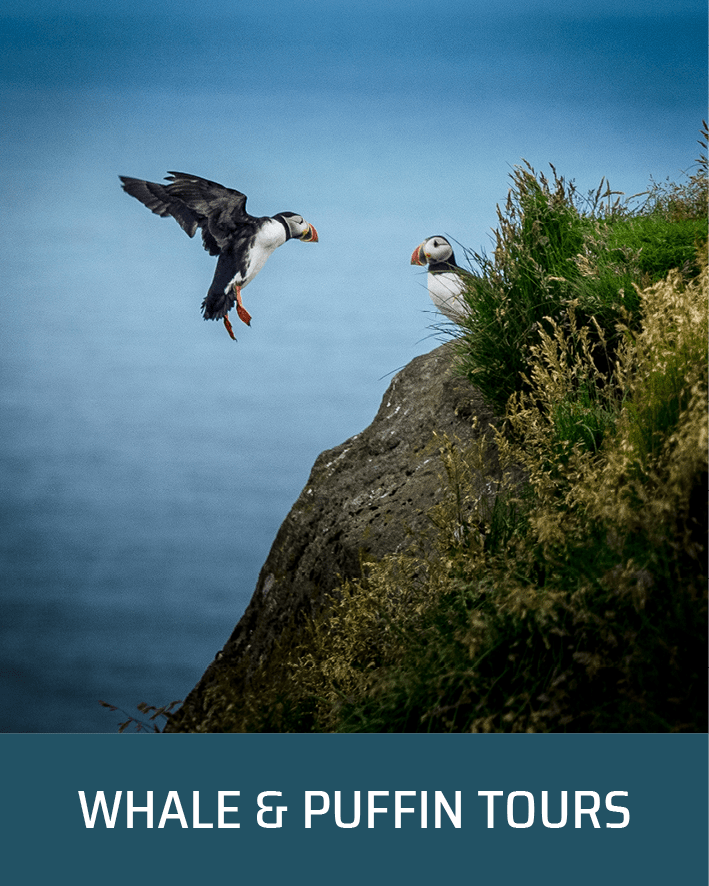 Puffin and Whale Tours in Iceland | Partner Tours | Hidden Iceland