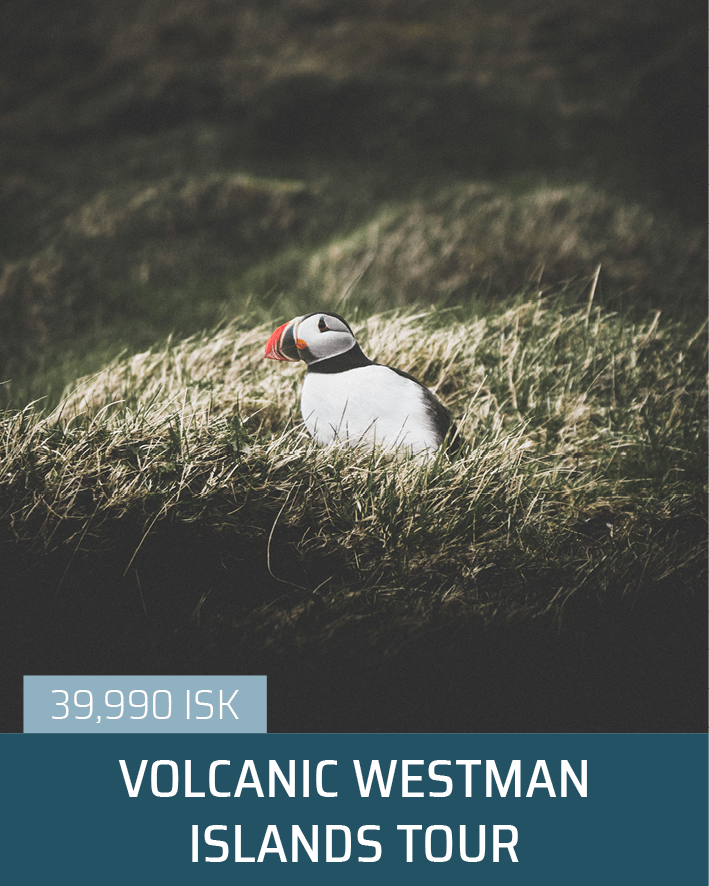 Volcanic Westman Islands Tour | Small Groups, Personalised Trips | Hidden Iceland