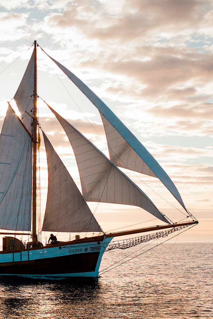 Sunset Sailing Whale Watching | Hidden Iceland | Photo North Sailing