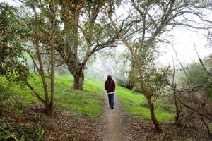 Hike Marian Bear Park, one of Clairemont's most diverse trails!