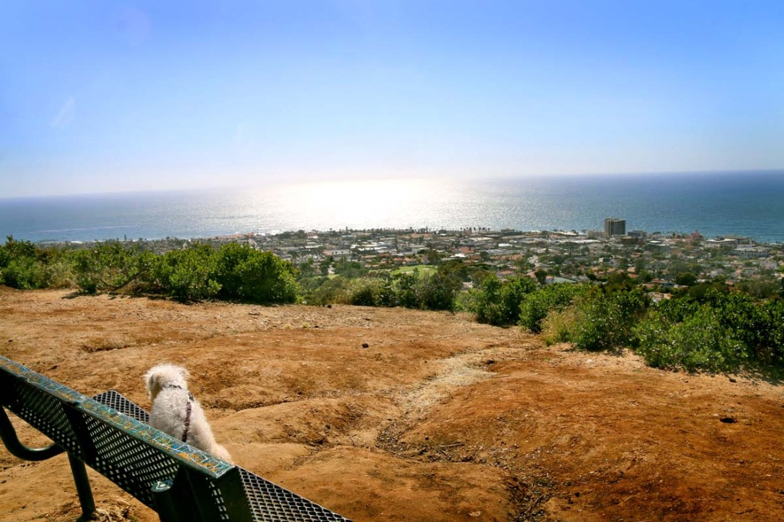 La Jolla Natural Park is no doubt a hidden gem. With scenic views that can be seen all the way to Mexico, this short hike is packed with diversity!