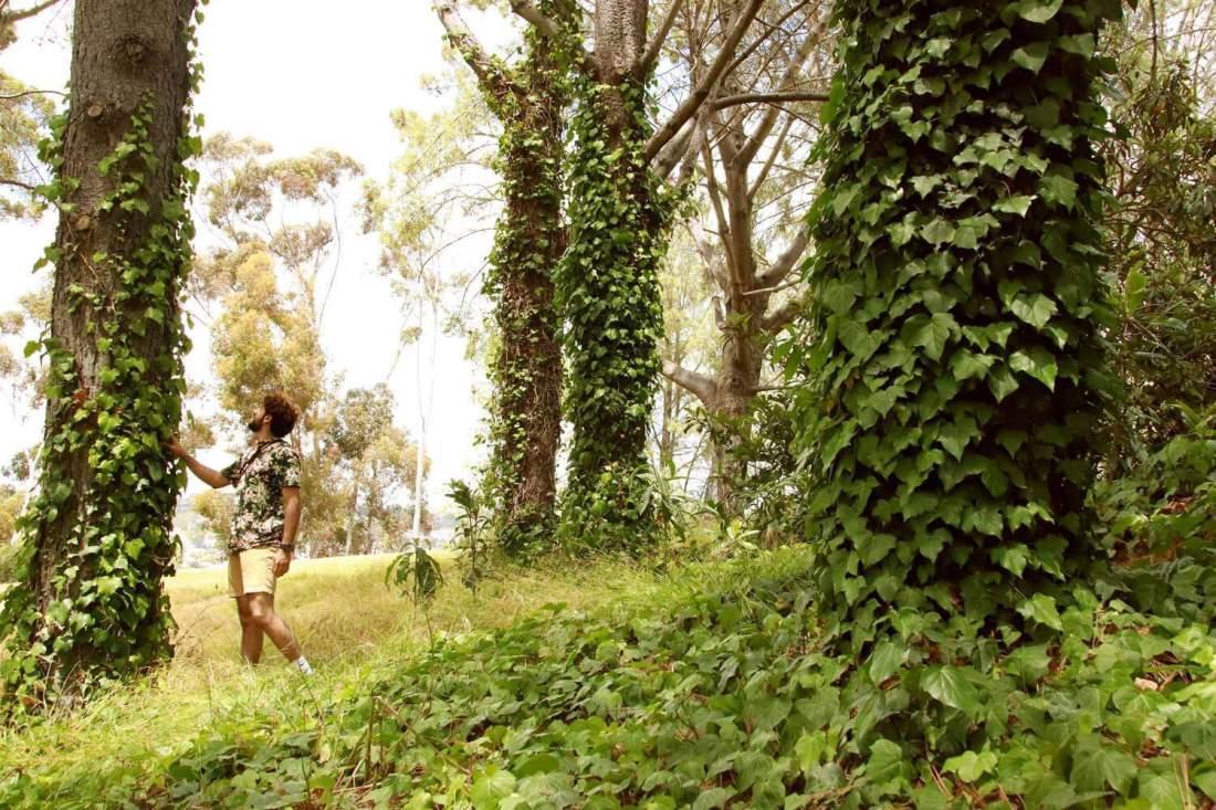Presidio Park Hiking Trails