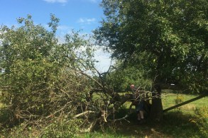 Large branch broke off the old apple tree.