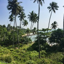 Wilder Strand in Tangalle