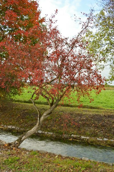 Herbst am Hüllgraben