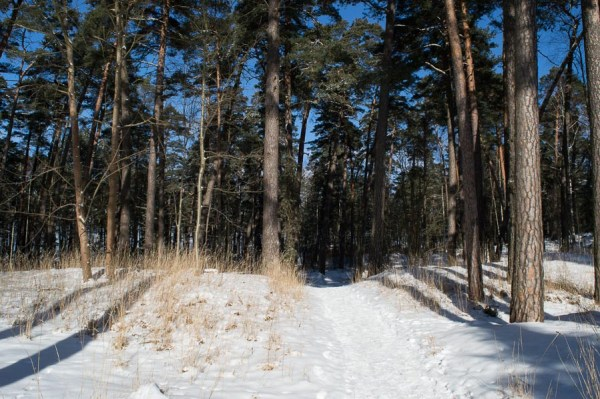 Wald in Jurmala Lettland