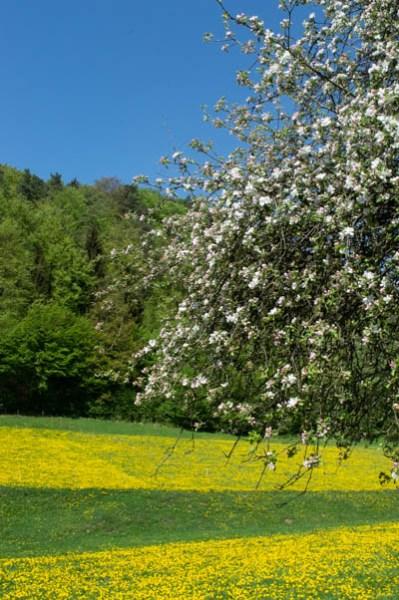 Blühende Wiesen in Tüchersfeld