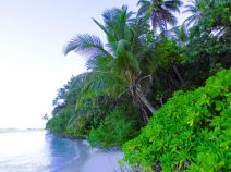 Lush jungle at the beach