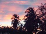 Palms ar sunset