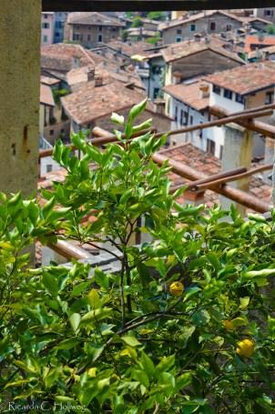 Citrus fruits in Limone sul Garda