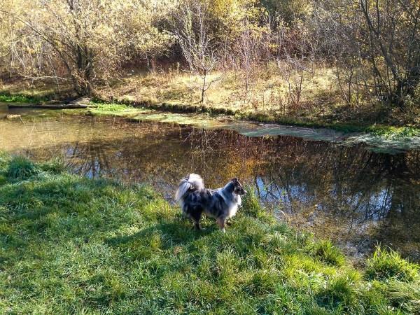 Dog at the Hüllgraben