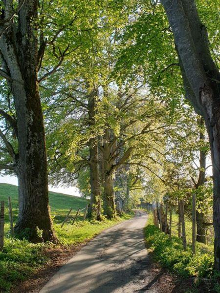 Quaint walk in Asberg