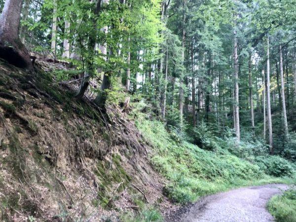 circular walk at Taubenberg mountain