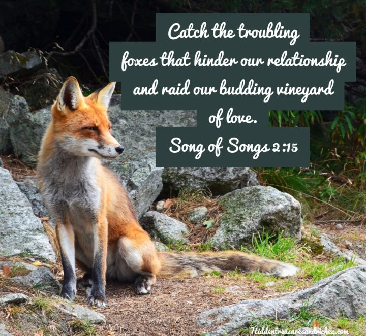 How to prevent little foxes from wreaking havoc in your marriage and relationships